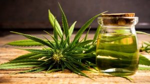 Health-Benefits-Of-Cannabis-And-Hemp-Oil-For-Pain.jpg